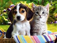 Picture of a cat and dog